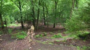 Forêt du Jardin